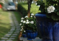Romantic garden1