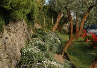 Romantic garden2
