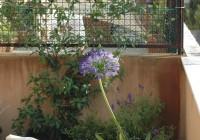 small terrace1